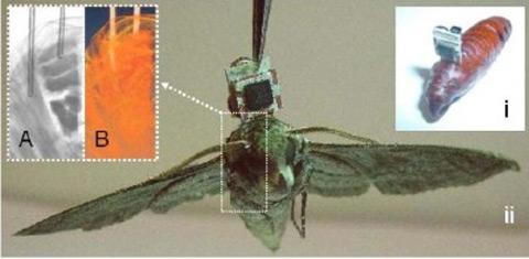 Lầu Năm Góc biến côn trùng thành máy móc