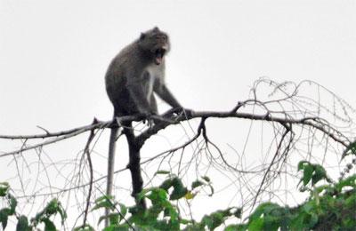 Nhiều động vật quý hiếm về với rừng U Minh