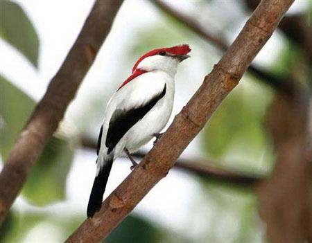 Hơn 860 loài động thực vật hoang dã đã bị tuyệt chủng
