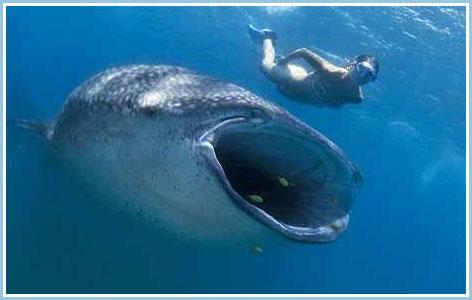 Đối mặt miệng cá khổng lồ