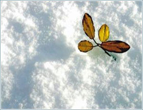 Cây cối cứu địa cầu khỏi họa đóng băng