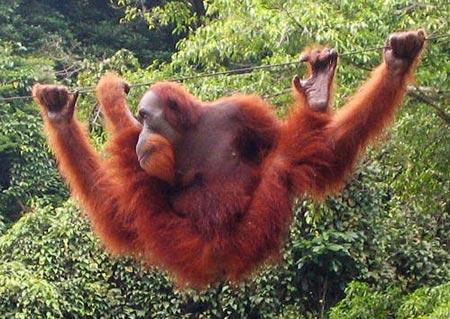 Mỹ giảm nợ để cứu rừng Indonesia