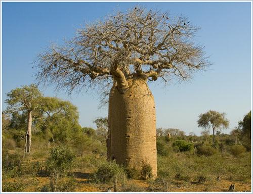 Loài cây nhân tạo được kêu gọi trồng trên toàn nước Mỹ