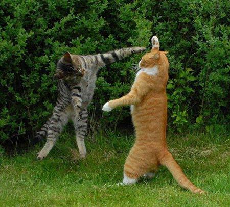 Mèo biết cách sai khiến người