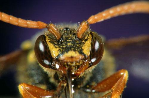 Cận cảnh mắt côn trùng