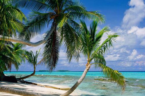 Thiên đường nhiệt đới đoạn tuyệt với xăng