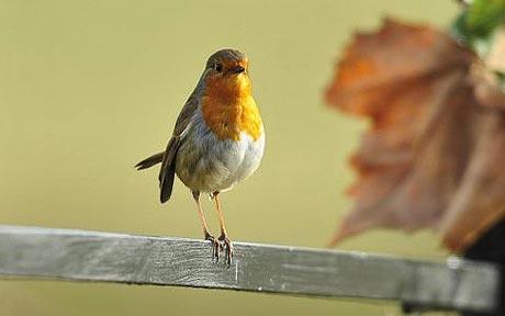 Chim sống ở thành phố dậy trễ hơn chim ở nông thôn