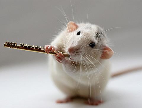 Phiêu bên phím đàn cùng chuột