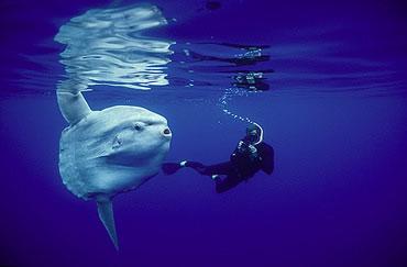 Top 10 con vật kỳ lạ nhất thế giới