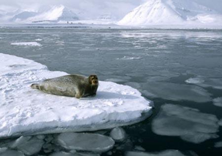 Bắc Cực mất khối băng gấp 3 lần nước Bỉ mỗi ngày