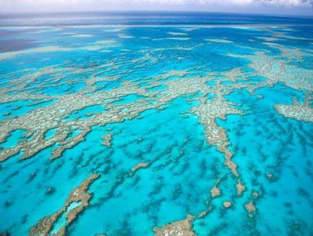 Đã quá muộn để cứu các đại dương?