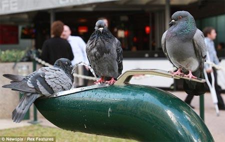 Chim thông minh giúp nhau uống nước