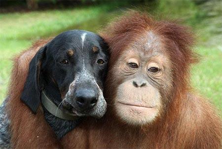 Tình bạn kỳ lạ của động vật