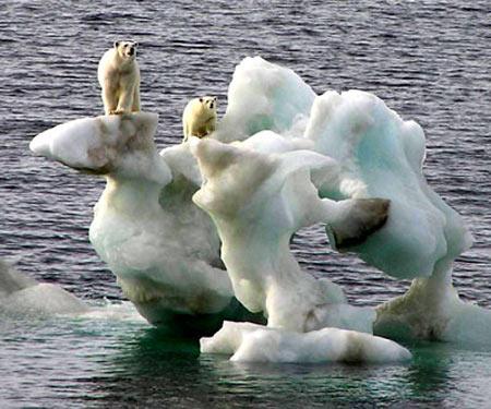 Bắc Cực thách thức quy luật tự nhiên