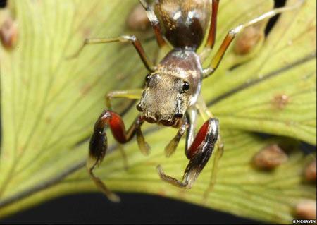 Con nhện nhảy thuộc loài Salticidae có thể nhìn xung quanh nhờ vị trí đặc biệt của đôi mắt.