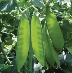 Mất các giống cây trồng truyền thống