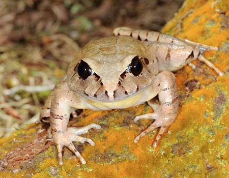 Top 7 loài động thực vật mới được phát hiện ở Úc