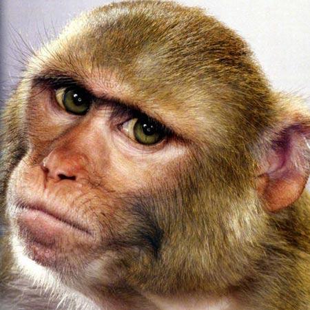 Khỉ hư phải vào trường cải tạo