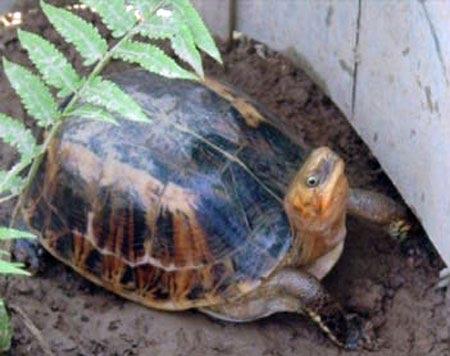 Cứu sống 34 cá thể rùa quý hiếm