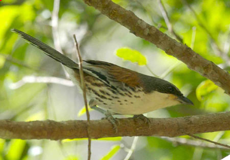 Chim quý xuất hiện ở Lâm Đồng