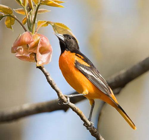 10 loại chim đẹp nhất hành tinh