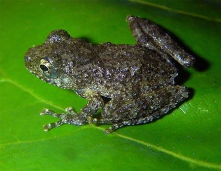 Phát hiện nhiều loài sinh vật mới tại Việt Nam