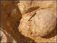 Tìm thấy hàng trăm tổ trứng khủng long ở Ấn Độ