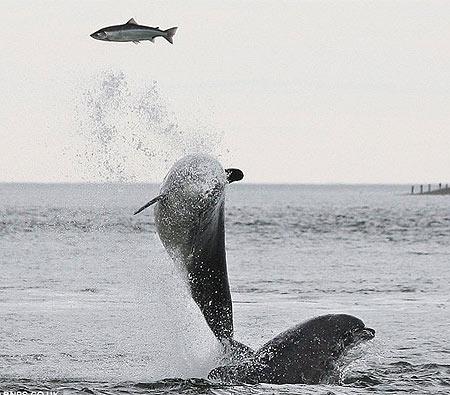 Khoảnh khắc đẹp cá heo săn mồi