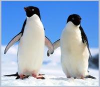 Số phận chim cánh cụt hoàng đế sẽ ra sao?