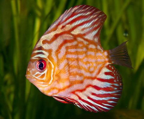 Các loài nước ngọt sẽ bị tuyệt chủng sớm