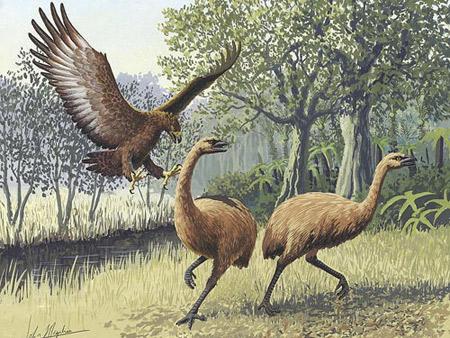 Ảnh minh họa đại bàng Haast's bắt con moa - loài chim chạy cao gấp đôi người trưởng thành. Ảnh: