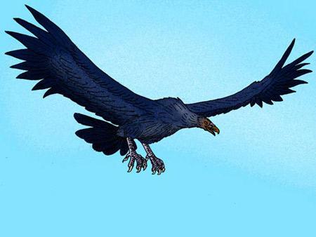 Ảnh minh họa chim