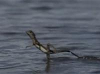 Giông túi khinh công trên nước
