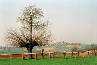 Hiện tượng cây mọc trên cây khác thường ở Italia