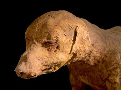 Khám phá xác ướp động vật ở Ai Cập