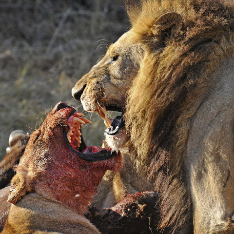 Ảnh đẹp về kẻ đi săn và con mồi
