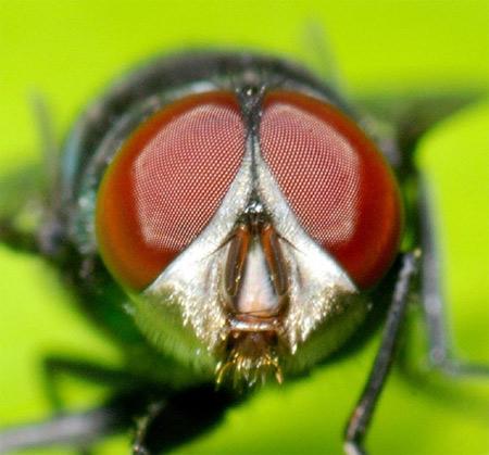 Ảnh côn trùng ấn tượng qua kỹ thuật macro