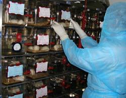 Viện Pasteur TP HCM sản xuất thành công văcxin H1N1