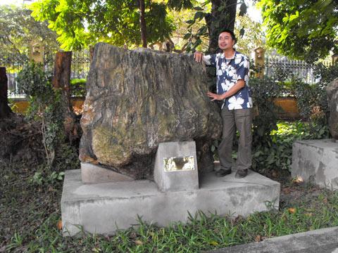 Cây gỗ hoá thạch ở Gia Lai lớn nhất Việt Nam?