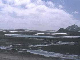 Virus tại Nam Cực có mức độ đa dạng gen cao