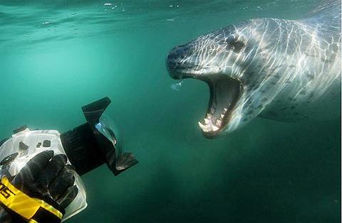 Cảnh săn mồi kỳ ảo dưới đại dương