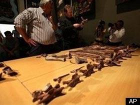 Phát hiện xương loài khủng long thuộc kỷ Jura