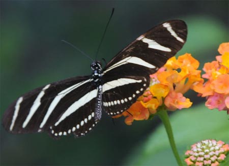 Thế giới bướm lộng lẫy