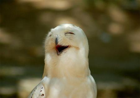 Ngắm động vật 'cười'