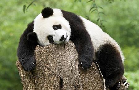 Ảnh đẹp về động vật có nguy cơ tuyệt chủng