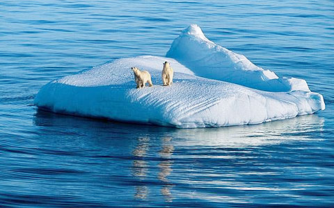 Thiên nhiên vùng băng giá