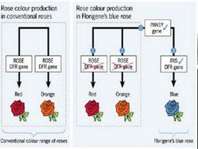 Tạo cây chuyển gen kháng bệnh virus bằng RNAi