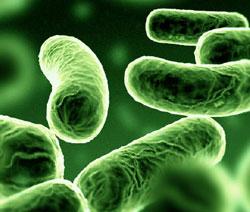 Phát hiện một số vi khuẩn trên da chống viêm loét