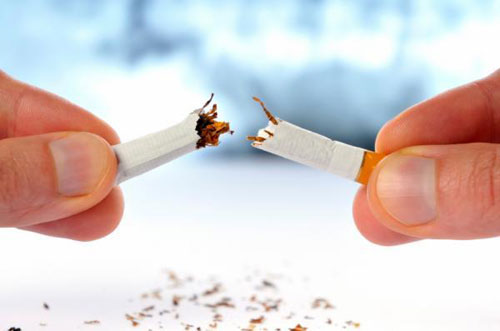 Trong thuốc lá có hàng trăm chủng vi khuẩn