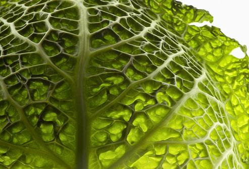 Cải bắp có nhiều chất glutathione giúp tăng cường hệ miễn dịch.